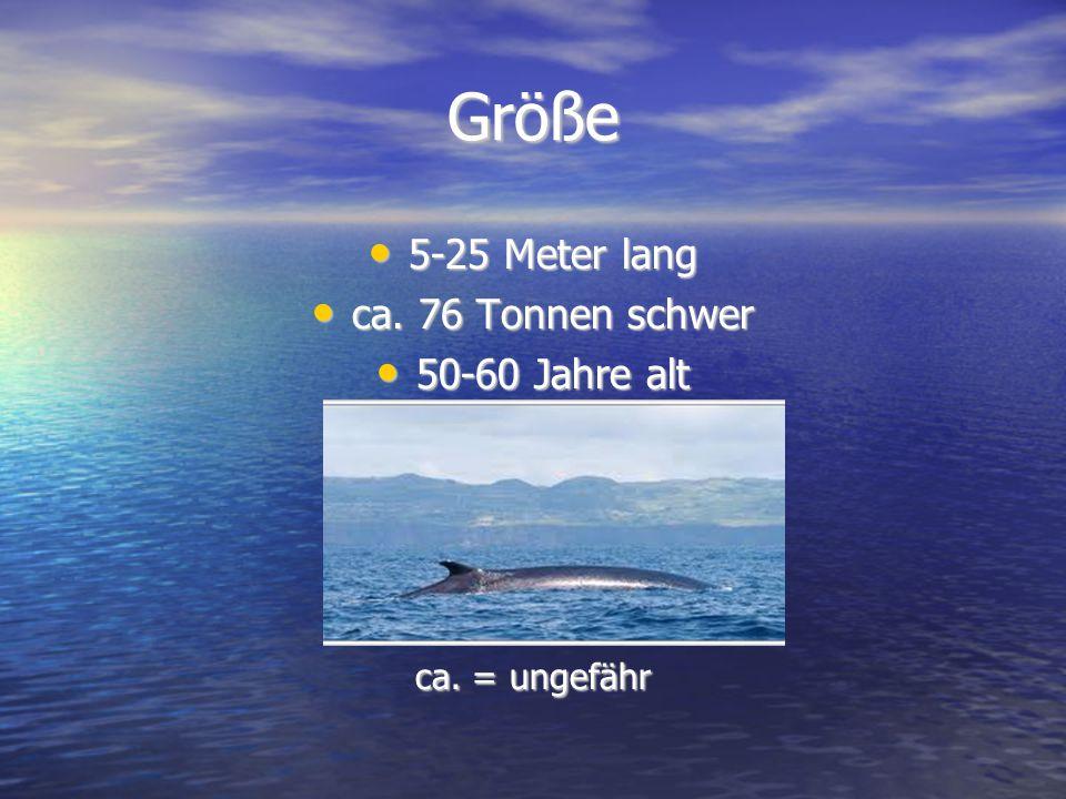Größe 5-25 Meter lang 5-25 Meter lang ca. 76 Tonnen schwer ca. 76 Tonnen schwer 50-60 Jahre alt 50-60 Jahre alt ca. = ungefähr