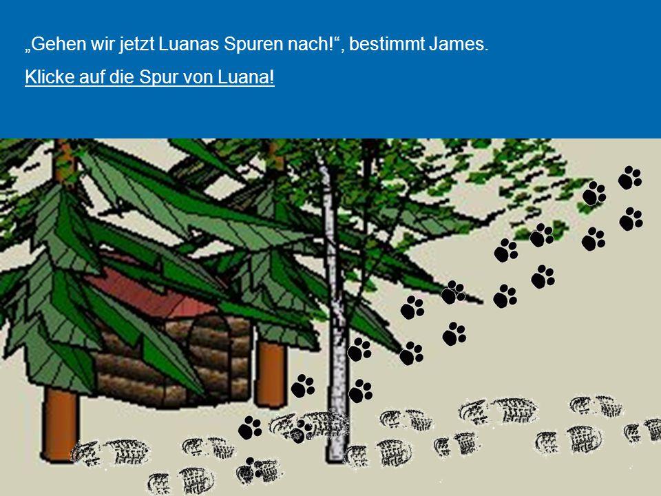"""""""Gehen wir jetzt Luanas Spuren nach!"""", bestimmt James. Klicke auf die Spur von Luana!"""