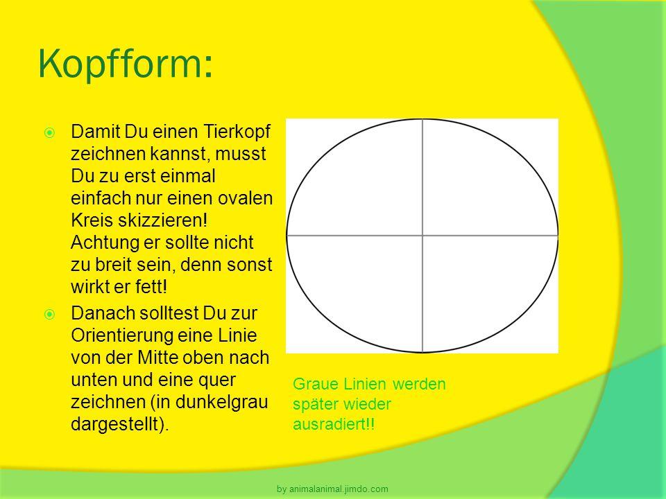 Kopfform:  Damit Du einen Tierkopf zeichnen kannst, musst Du zu erst einmal einfach nur einen ovalen Kreis skizzieren! Achtung er sollte nicht zu bre