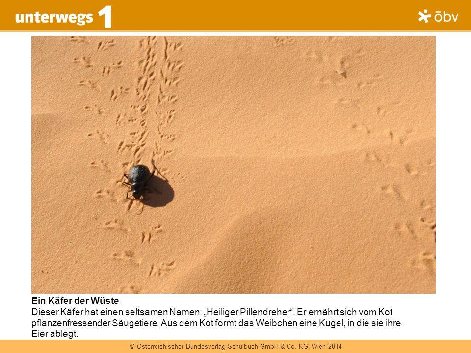 © Österreichischer Bundesverlag Schulbuch GmbH & Co KG, Wien 2013   www.oebv.at unterwegs 1 © Österreichischer Bundesverlag Schulbuch GmbH & Co.