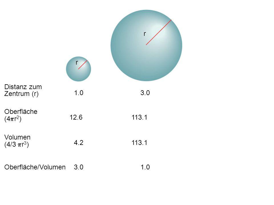 Distanz zum Zentrum (r) Oberfläche (4  r 2 ) Volumen (4/3  r 3 ) Oberfläche/Volumen 1.03.0 12.6 4.2 3.0 113.1 1.0 r r