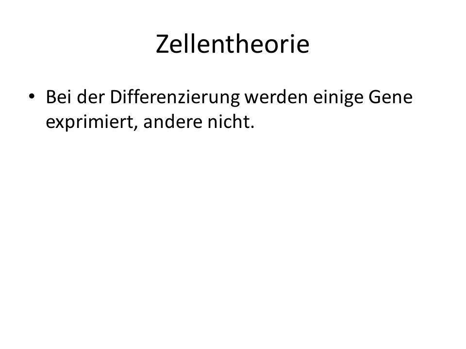 Zellentheorie Bei der Differenzierung werden einige Gene exprimiert, andere nicht.