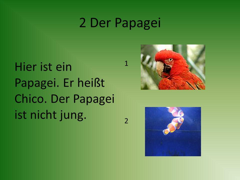 2 Der Papagei Hier ist ein Papagei. Er heißt Chico. Der Papagei ist nicht jung. 1212