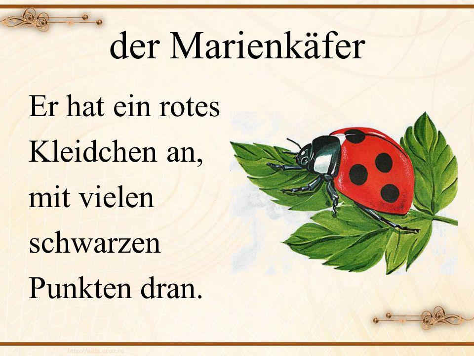 der Marienkäfer Er hat ein rotes Kleidchen an, mit vielen schwarzen Punkten dran.