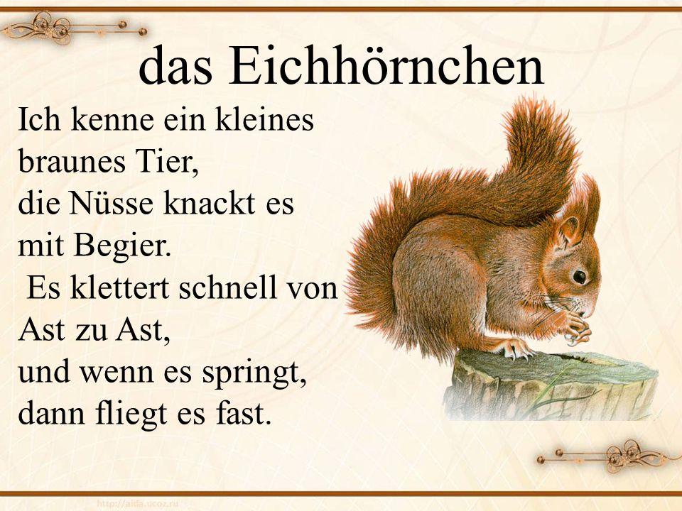 das Eichhörnchen Ich kenne ein kleines braunes Tier, die Nüsse knackt es mit Begier.