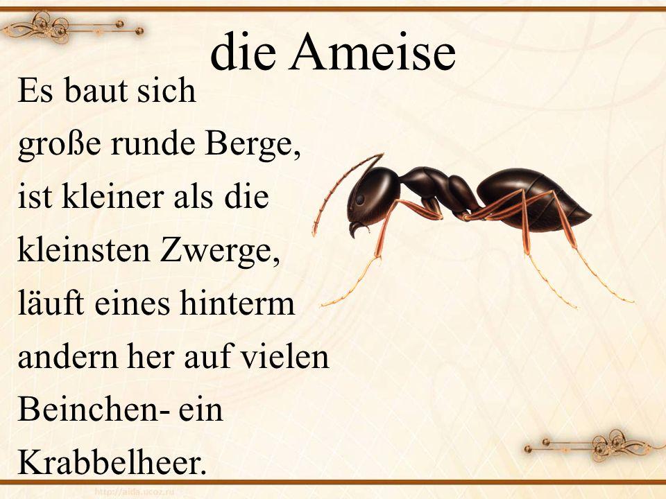 die Ameise Es baut sich große runde Berge, ist kleiner als die kleinsten Zwerge, läuft eines hinterm andern her auf vielen Beinchen- ein Krabbelheer.
