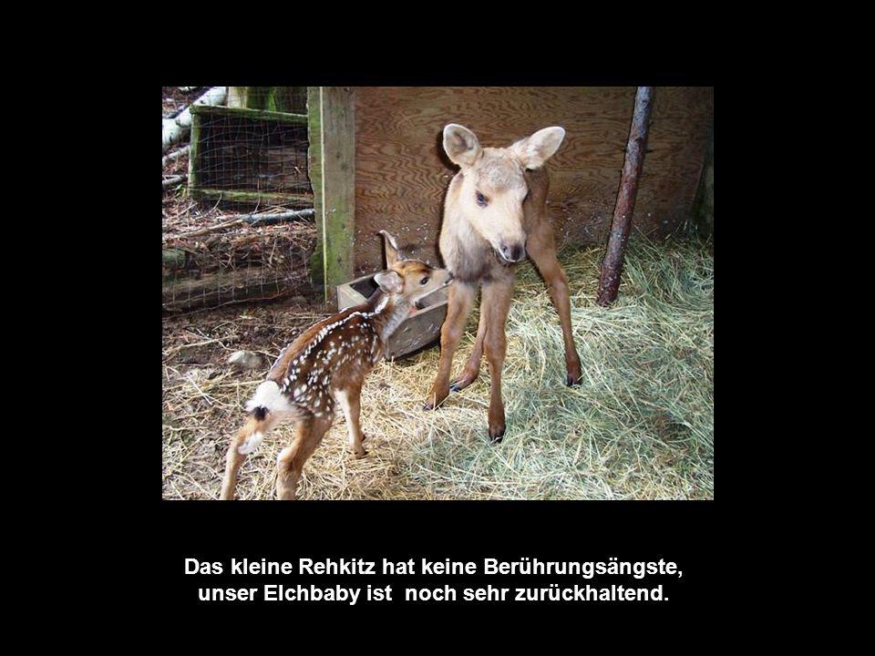 Sie zieht sie groß, bis die Tiere eine Überlebenschance in der Wildnis haben.