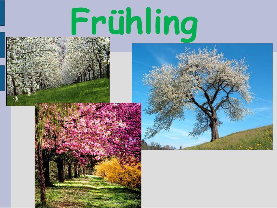 21. März. – 21. Juni TulpenSchneeglöckchen Schlüsselblumen