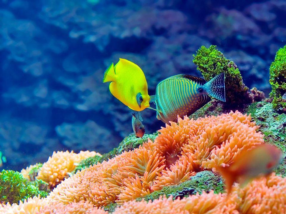 Unterwasserwelt 22