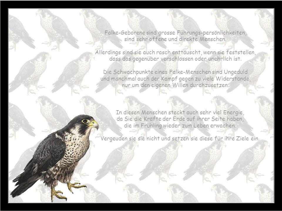 Falke 21.3. – 19.4. Zeit des Erwachens Baum: Ulme Stein: Feueropal Farbe: gelb Falke-Menschen gehören zu den enthusiastischen und impulsiven Artgenoss