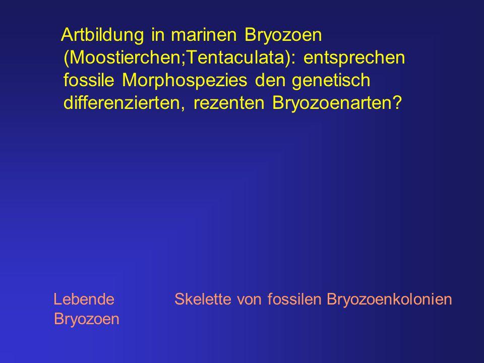 Artbildung in marinen Bryozoen (Moostierchen;Tentaculata): entsprechen fossile Morphospezies den genetisch differenzierten, rezenten Bryozoenarten? Le