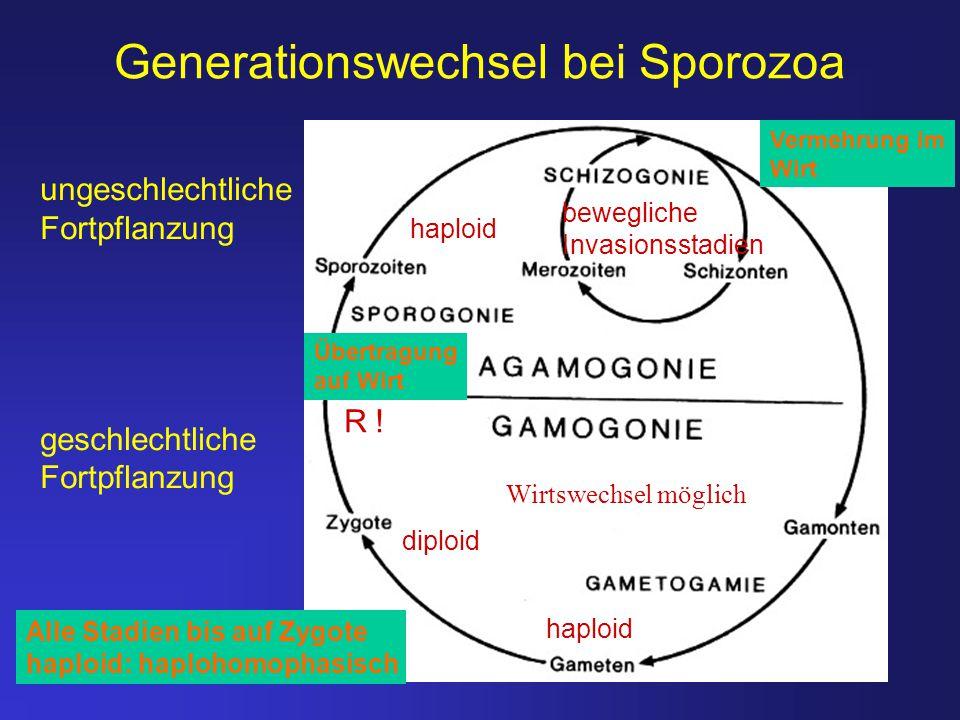 Generationswechsel bei Sporozoa ungeschlechtliche Fortpflanzung geschlechtliche Fortpflanzung diploid haploid bewegliche Invasionsstadien Wirtswechsel