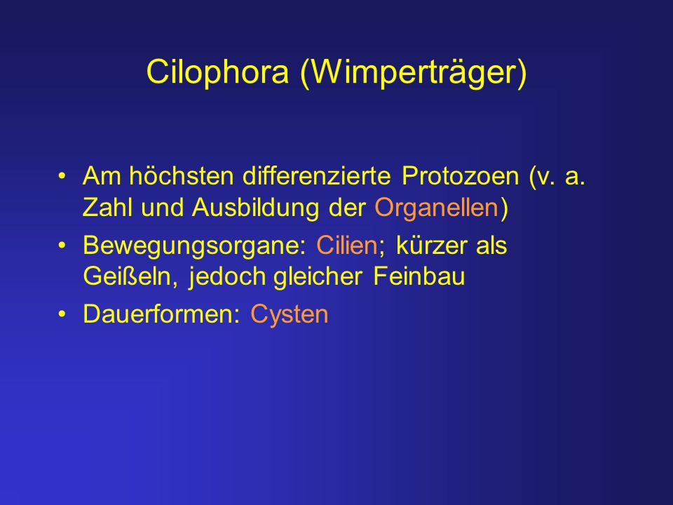 Cilophora (Wimperträger) Am höchsten differenzierte Protozoen (v. a. Zahl und Ausbildung der Organellen) Bewegungsorgane: Cilien; kürzer als Geißeln,