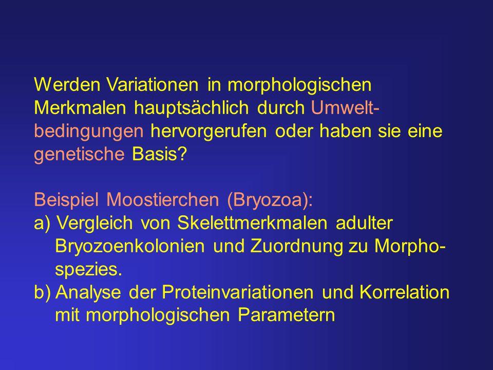Werden Variationen in morphologischen Merkmalen hauptsächlich durch Umwelt- bedingungen hervorgerufen oder haben sie eine genetische Basis? Beispiel M