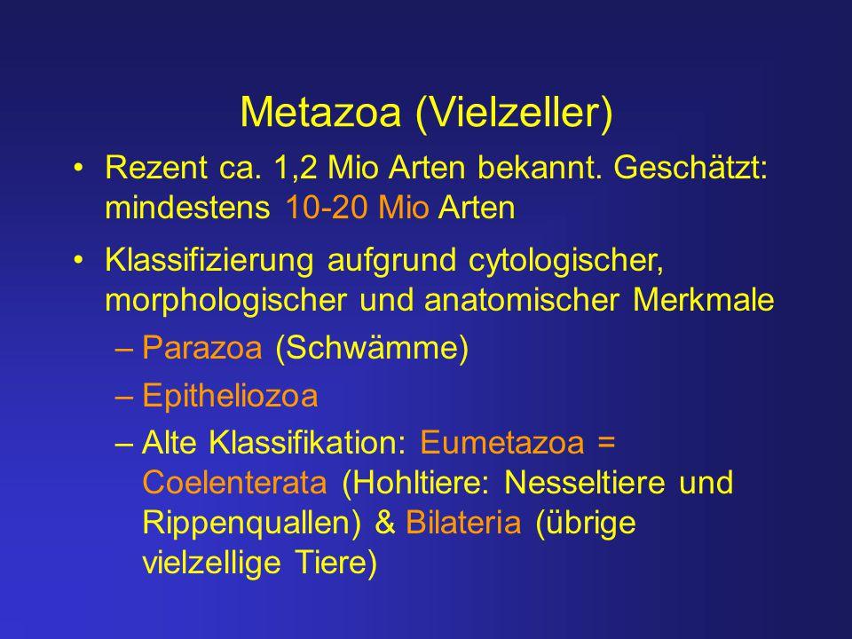 Metazoa (Vielzeller) Rezent ca. 1,2 Mio Arten bekannt. Geschätzt: mindestens 10-20 Mio Arten Klassifizierung aufgrund cytologischer, morphologischer u