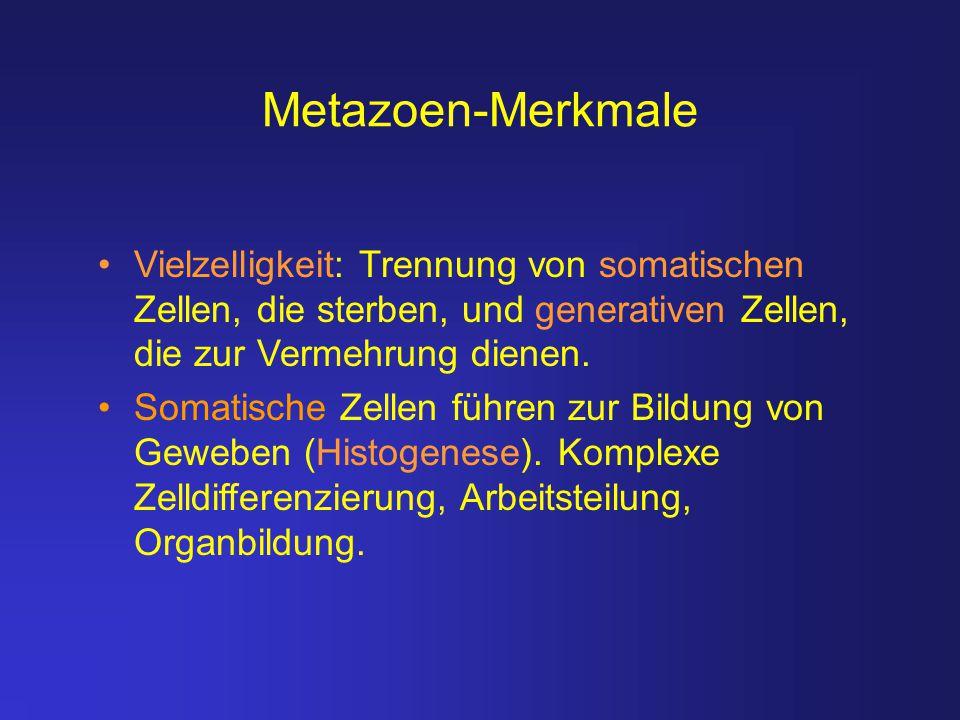 Metazoen-Merkmale Vielzelligkeit: Trennung von somatischen Zellen, die sterben, und generativen Zellen, die zur Vermehrung dienen. Somatische Zellen f