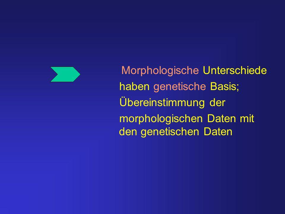 Morphologische Unterschiede haben genetische Basis; Übereinstimmung der morphologischen Daten mit den genetischen Daten