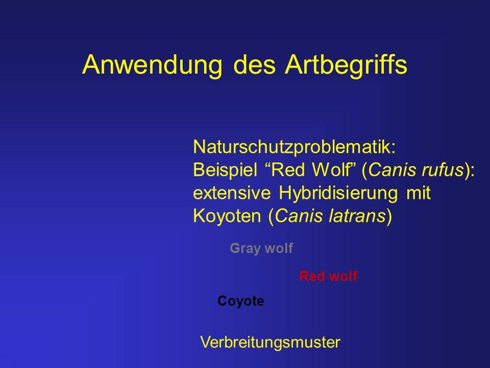 """Anwendung des Artbegriffs Naturschutzproblematik: Beispiel """"Red Wolf"""" (Canis rufus): extensive Hybridisierung mit Koyoten (Canis latrans) Gray wolf Re"""