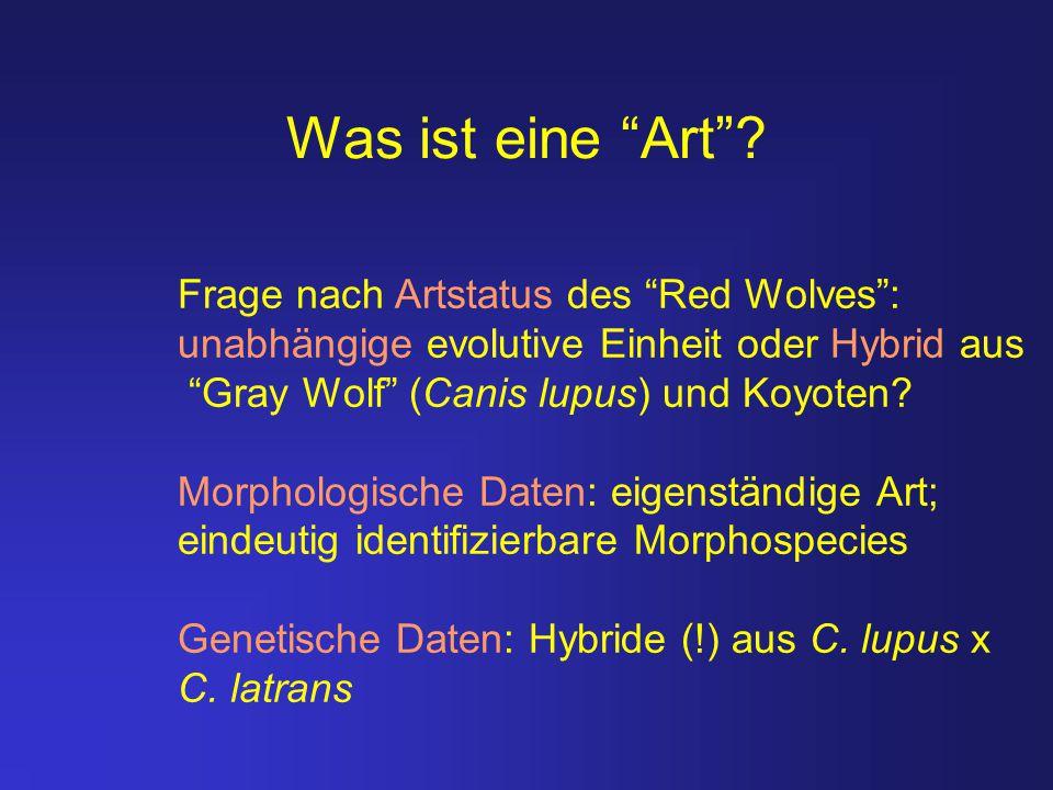 """Was ist eine """"Art""""? Frage nach Artstatus des """"Red Wolves"""": unabhängige evolutive Einheit oder Hybrid aus """"Gray Wolf"""" (Canis lupus) und Koyoten? Morpho"""