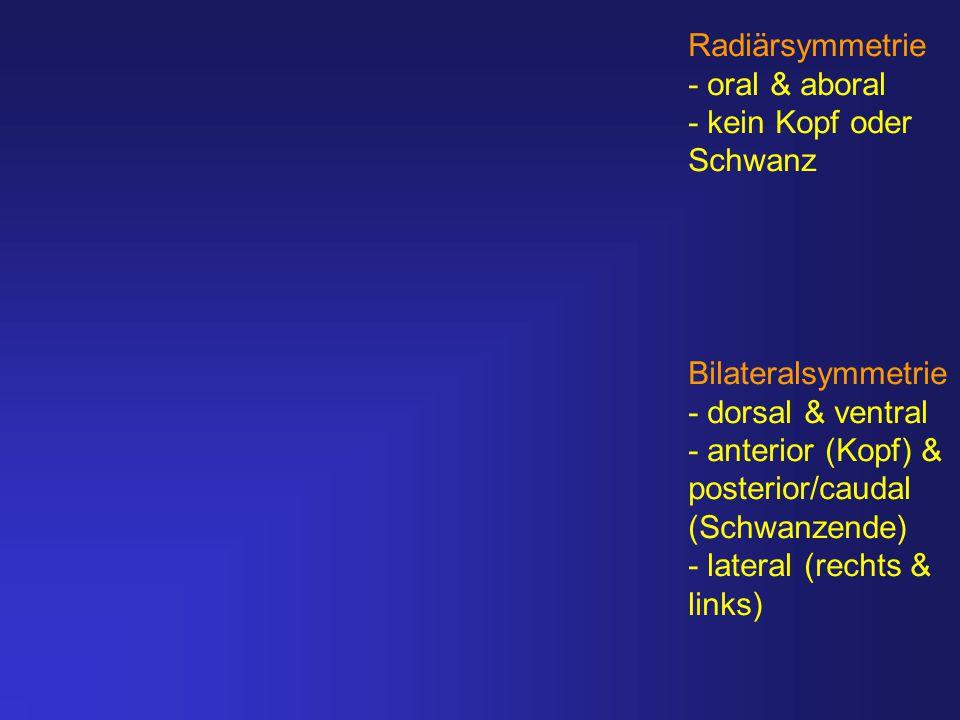 Radiärsymmetrie - oral & aboral - kein Kopf oder Schwanz Bilateralsymmetrie - dorsal & ventral - anterior (Kopf) & posterior/caudal (Schwanzende) - la
