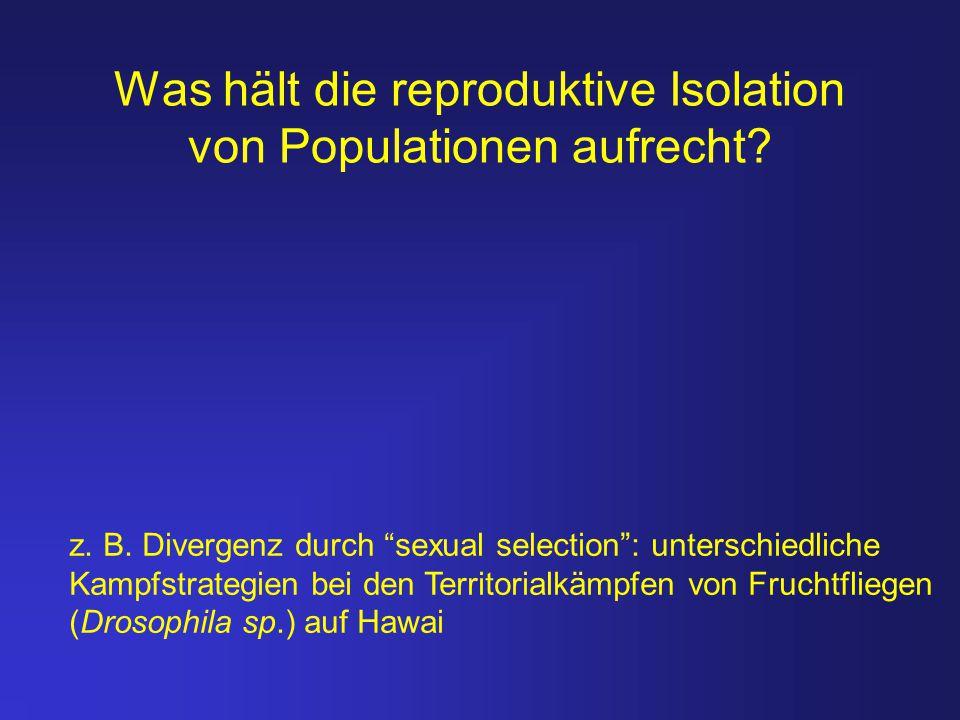 """Was hält die reproduktive Isolation von Populationen aufrecht? z. B. Divergenz durch """"sexual selection"""": unterschiedliche Kampfstrategien bei den Terr"""