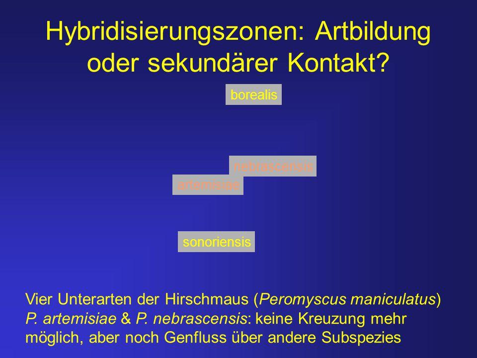 Hybridisierungszonen: Artbildung oder sekundärer Kontakt? Vier Unterarten der Hirschmaus (Peromyscus maniculatus) P. artemisiae & P. nebrascensis: kei