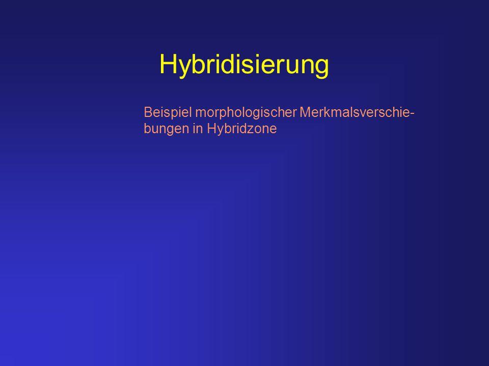 Hybridisierung Beispiel morphologischer Merkmalsverschie- bungen in Hybridzone