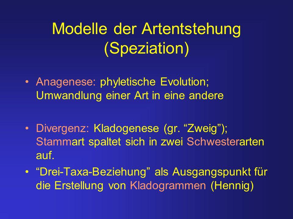 """Modelle der Artentstehung (Speziation) Anagenese: phyletische Evolution; Umwandlung einer Art in eine andere Divergenz: Kladogenese (gr. """"Zweig""""); Sta"""