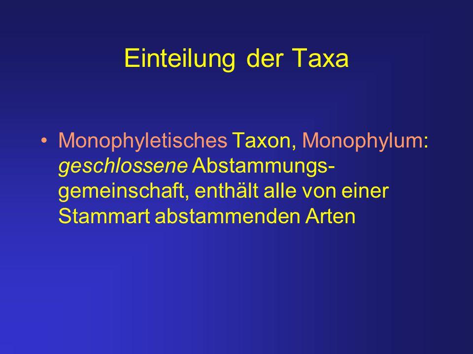 Einteilung der Taxa Monophyletisches Taxon, Monophylum: geschlossene Abstammungs- gemeinschaft, enthält alle von einer Stammart abstammenden Arten