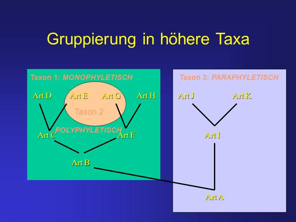 Gruppierung in höhere Taxa Taxon 1: MONOPHYLETISCH Taxon 3: PARAPHYLETISCH Art D Art E Art G Art H Art J Art K Art C Art F Art I Art B Art A Taxon 2: