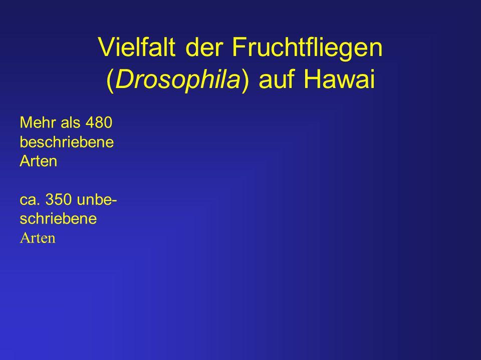 Vielfalt der Fruchtfliegen (Drosophila) auf Hawai Mehr als 480 beschriebene Arten ca. 350 unbe- schriebene Arten