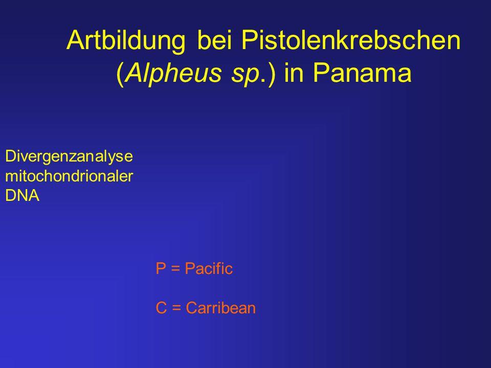 Artbildung bei Pistolenkrebschen (Alpheus sp.) in Panama Divergenzanalyse mitochondrionaler DNA P = Pacific C = Carribean