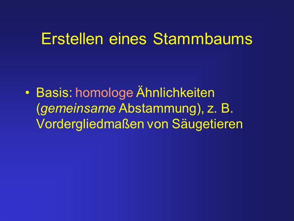 Erstellen eines Stammbaums Basis: homologe Ähnlichkeiten (gemeinsame Abstammung), z. B. Vordergliedmaßen von Säugetieren