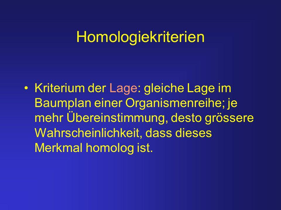 Homologiekriterien Kriterium der Lage: gleiche Lage im Baumplan einer Organismenreihe; je mehr Übereinstimmung, desto grössere Wahrscheinlichkeit, das