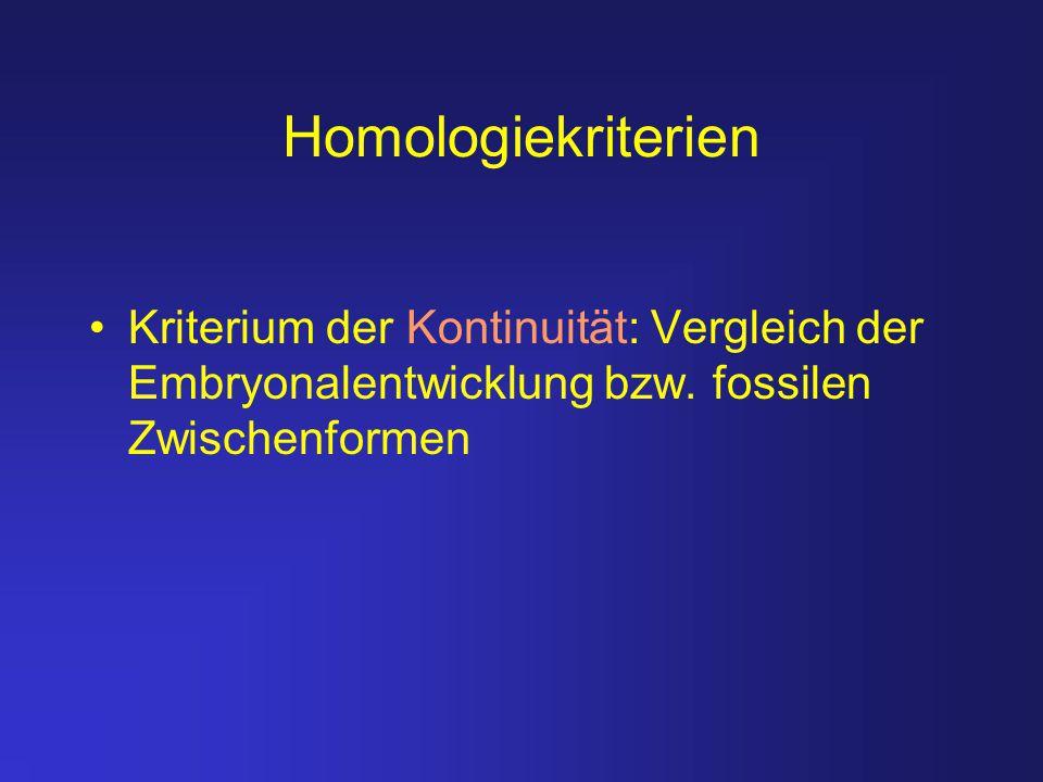 Homologiekriterien Kriterium der Kontinuität: Vergleich der Embryonalentwicklung bzw. fossilen Zwischenformen