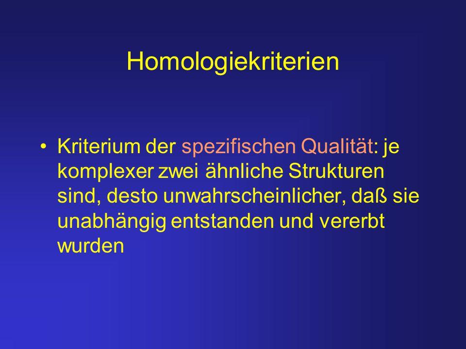 Homologiekriterien Kriterium der spezifischen Qualität: je komplexer zwei ähnliche Strukturen sind, desto unwahrscheinlicher, daß sie unabhängig entst