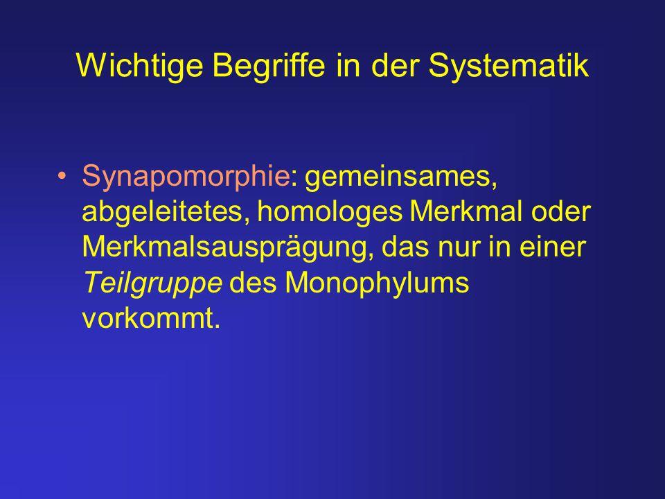 Wichtige Begriffe in der Systematik Synapomorphie: gemeinsames, abgeleitetes, homologes Merkmal oder Merkmalsausprägung, das nur in einer Teilgruppe d