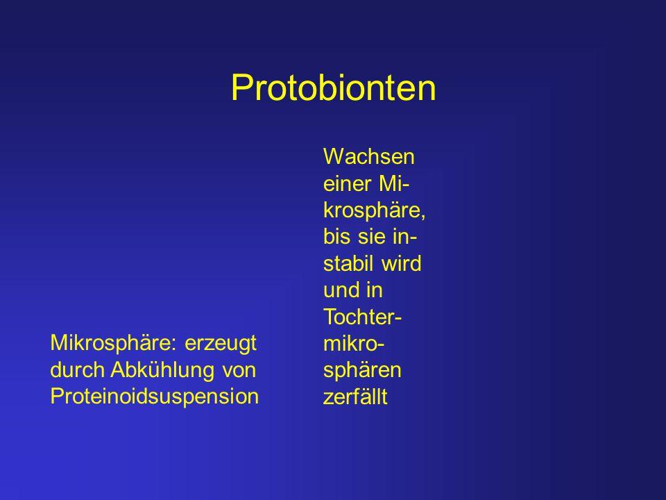 Protobionten Mikrosphäre: erzeugt durch Abkühlung von Proteinoidsuspension Wachsen einer Mi- krosphäre, bis sie in- stabil wird und in Tochter- mikro-