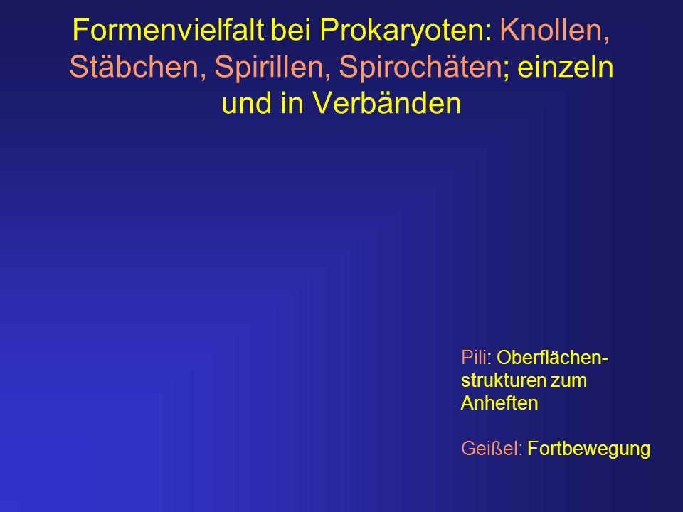 Formenvielfalt bei Prokaryoten: Knollen, Stäbchen, Spirillen, Spirochäten; einzeln und in Verbänden Pili: Oberflächen- strukturen zum Anheften Geißel: