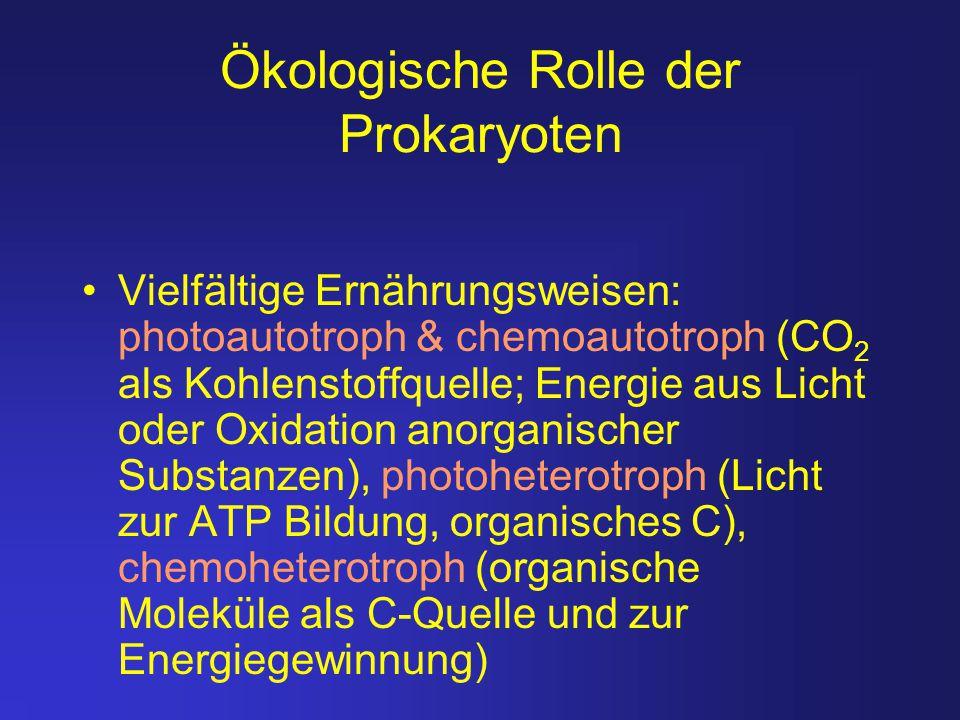 Ökologische Rolle der Prokaryoten Vielfältige Ernährungsweisen: photoautotroph & chemoautotroph (CO 2 als Kohlenstoffquelle; Energie aus Licht oder Ox