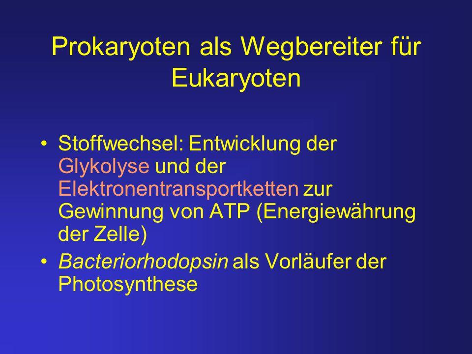 Prokaryoten als Wegbereiter für Eukaryoten Stoffwechsel: Entwicklung der Glykolyse und der Elektronentransportketten zur Gewinnung von ATP (Energiewäh