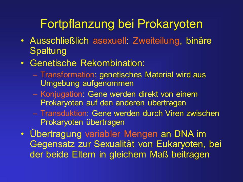 Fortpflanzung bei Prokaryoten Ausschließlich asexuell: Zweiteilung, binäre Spaltung Genetische Rekombination: –Transformation: genetisches Material wi