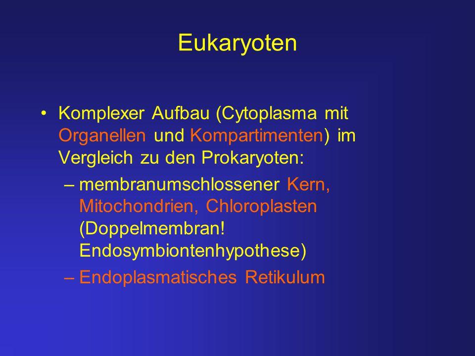 Eukaryoten Komplexer Aufbau (Cytoplasma mit Organellen und Kompartimenten) im Vergleich zu den Prokaryoten: –membranumschlossener Kern, Mitochondrien,