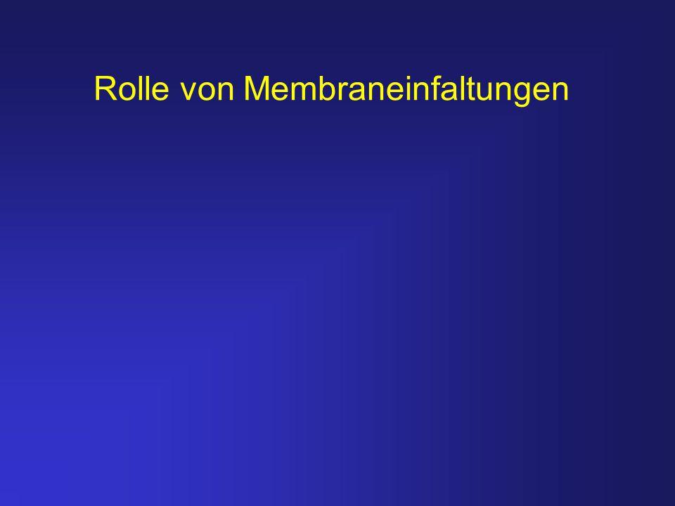 Rolle von Membraneinfaltungen