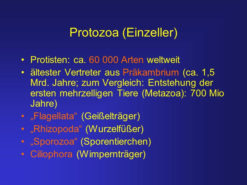 Protozoa (Einzeller) Protisten: ca. 60 000 Arten weltweit ältester Vertreter aus Präkambrium (ca. 1,5 Mrd. Jahre; zum Vergleich: Entstehung der ersten