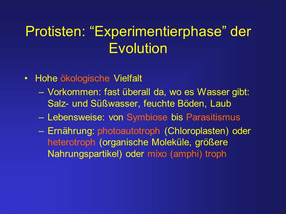 """Protisten: """"Experimentierphase"""" der Evolution Hohe ökologische Vielfalt –Vorkommen: fast überall da, wo es Wasser gibt: Salz- und Süßwasser, feuchte B"""
