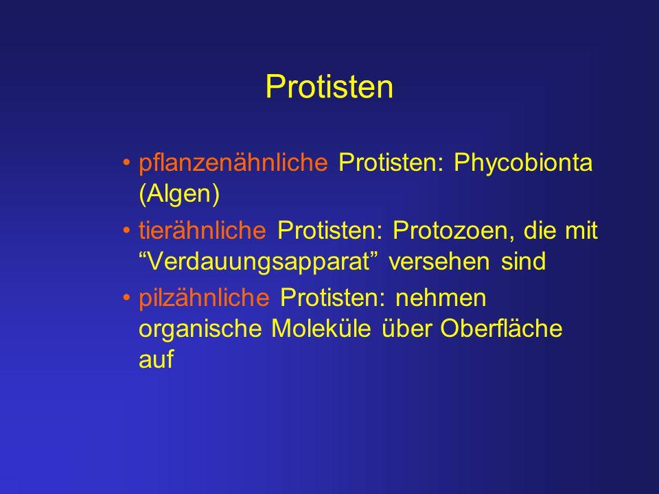 """Protisten pflanzenähnliche Protisten: Phycobionta (Algen) tierähnliche Protisten: Protozoen, die mit """"Verdauungsapparat"""" versehen sind pilzähnliche Pr"""