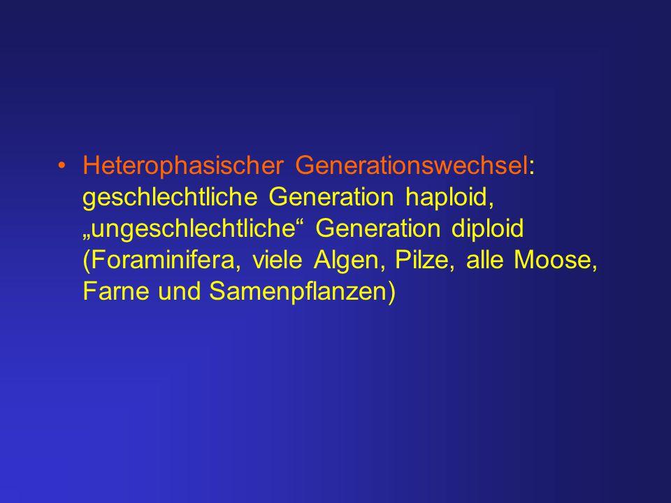 "Heterophasischer Generationswechsel: geschlechtliche Generation haploid, ""ungeschlechtliche"" Generation diploid (Foraminifera, viele Algen, Pilze, all"