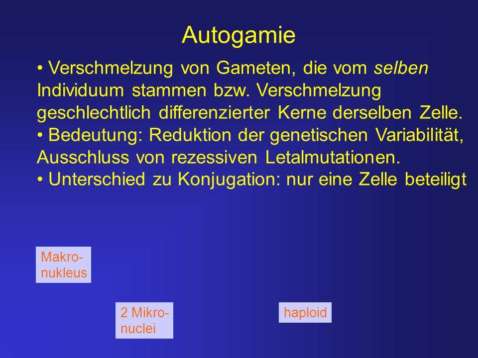 Autogamie Verschmelzung von Gameten, die vom selben Individuum stammen bzw. Verschmelzung geschlechtlich differenzierter Kerne derselben Zelle. Bedeut