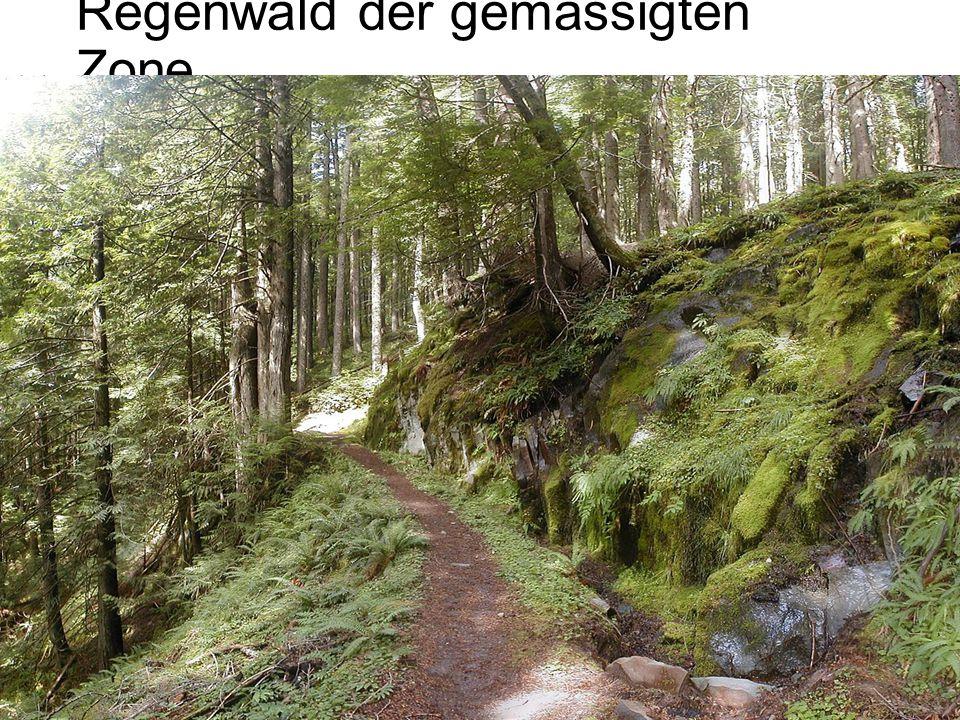Regenwald der gemässigten Zone